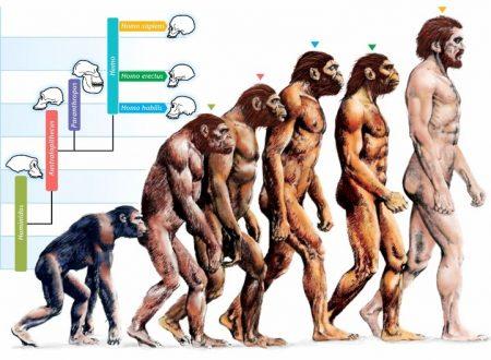Evoluzionismo e teorie della razza